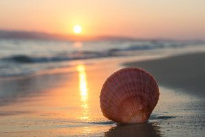 Marine metal pollution weakens scallops, affecting their growth and survival